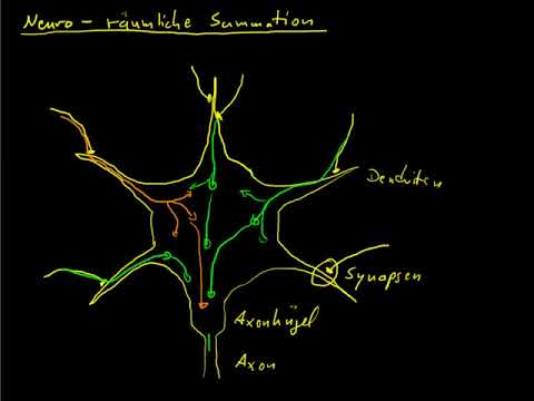 Neuro 11 räumliche Summationиз YouTube · Длительность: 3 мин54 с