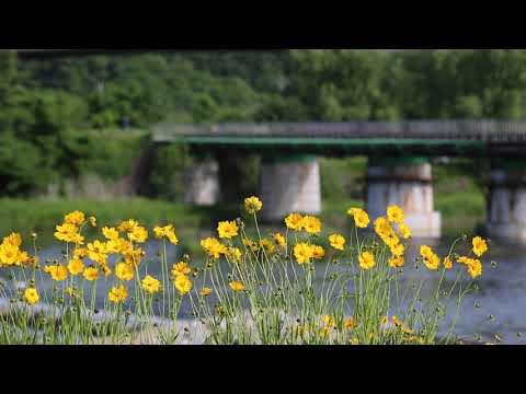 скачать футаж желтые цветы