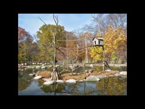 Steinhardt Garden Landscapes Youtube