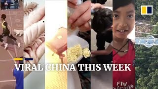 Viral China this week: stray dog 'Little White' joins race, and more