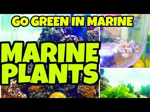 Marine Algae Plants and Some Marine Fishes