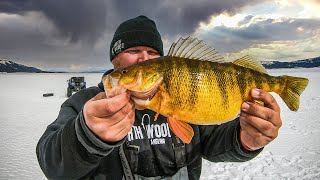 Ice Fishing the BIGGEST PERCH In North America
