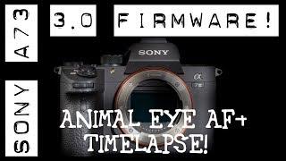 Sony A7iii Firmware 3.0! Animal Eye AF! Intervalometer + Update tutorial