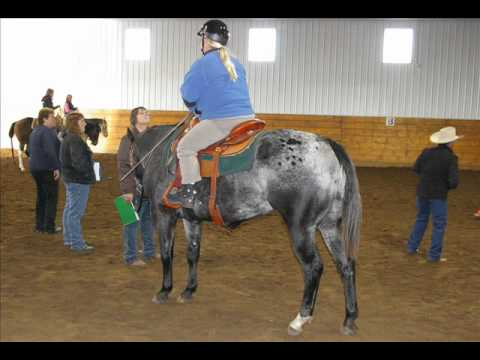 Alberta's 4-H Equine Project