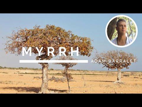Myrrh - The Oil of Mother