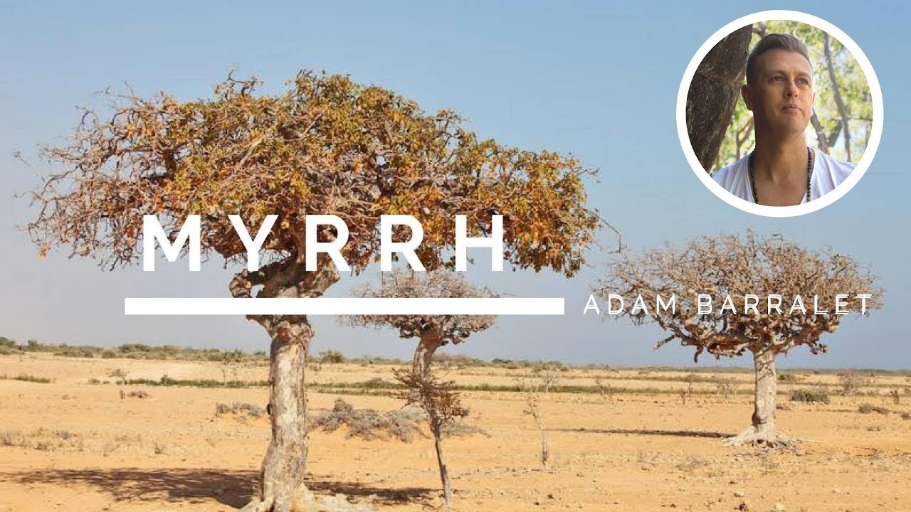 Myrrh - The Oil of Mother. Discover the legend of this resin!