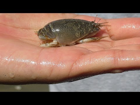 10 Creepiest Crustaceans in the World