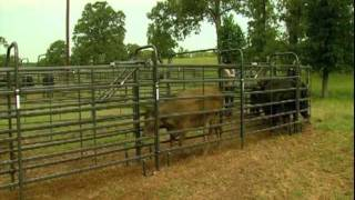 Priefert Medium Cattle Working Systems
