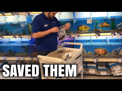 BUYING ALL THE DYING OSCAR FISH FROM PETSMART!