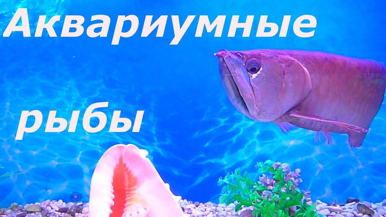 Рыбки с алиэкспрес - YouTube