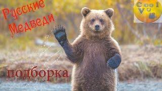 Русские медведи ПОДБОРКА N1(Сool Vc)