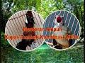 Masteran Ampuh Kapas Tembak Kombinasi Cililin  Mp3 - Mp4 Download