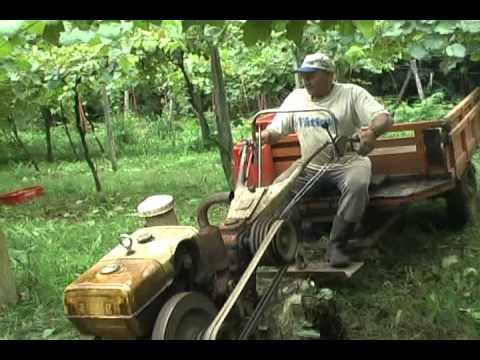 Urussanga busca título de capital brasileira do vinho Goethe