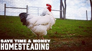 SAVE MONEY AND TIME HOMESTEADING with Farmer Brad