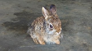 Indian Forest Rabbit | Cute Bunny