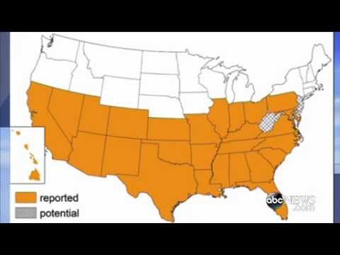 Deadly kissing bugs, already reported in the Carolinas, have spread north, CDC says