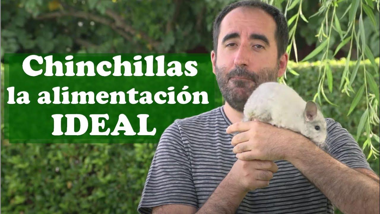 Chinchillas: La alimentación ideal para chinchillas