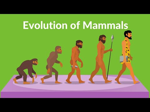 Evolution of Mammals | How did Mammals Evolved | Video for kids