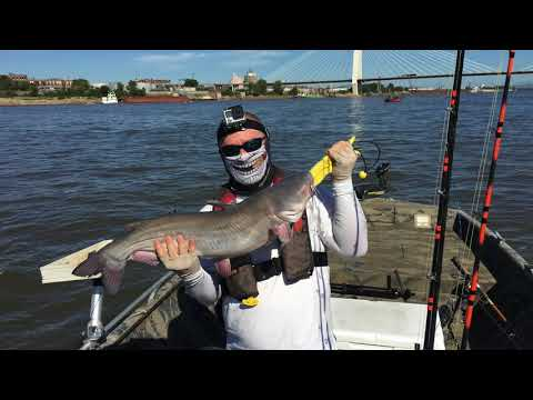 St. Louis Blue Catfish on the Mississippi River