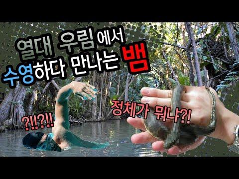 열대 물속에서 수영하면 만날지모르는 그뱀입니다
