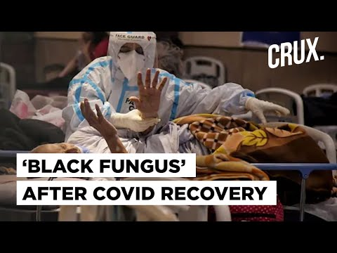 What Is Mucormycosis Or Black Fungus That Can Cause Blindness or Even Death After Covid-19