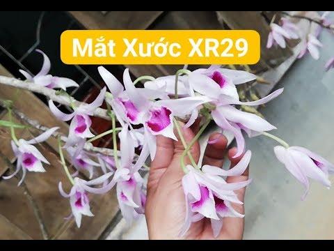 Tuyển tập toàn siêu phẩm mặt hoa Phi Điệp - Dã Hạc Kon Tum | Orchid| Đã bán hết videó letöltés