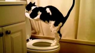 Кот писает в унитаз(, 2011-11-22T15:13:51.000Z)