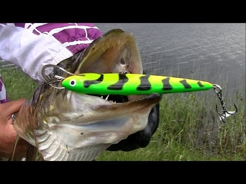 Pike Attack Salmo Underwater. Fishing With Lures Hard-baits / Strikes. Рыбалка щука атакует воблер.