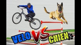 JE DÉFIE UN CHIEN !  (Vélo vs Chien)