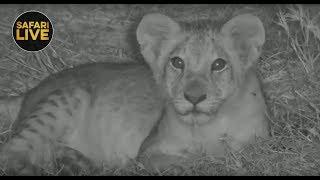 safariLIVE - Sunset Safari - October 27, 2018
