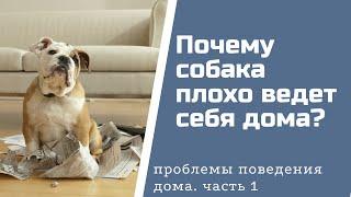 Почему собака плохо ведет себя дома?