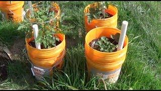 DIY Planter in 5 Gallon Buckets