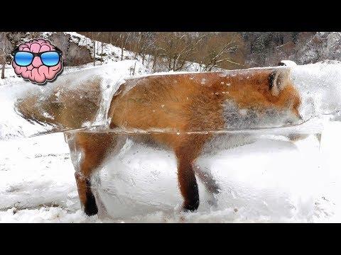 Top 10 AMAZING ANIMALS Found FROZEN IN TIME