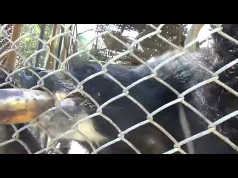 Yadanabon Garden Zoo (Mandalay, Myanmar)