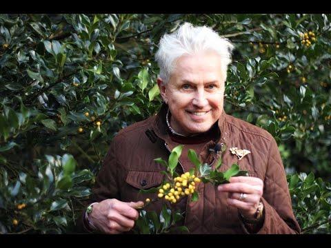 Get Gardening: Berry BERRY Good! (Winter Interest, Part 3)