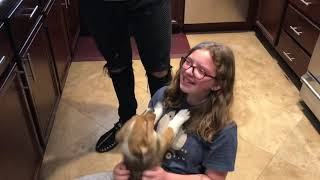 Surprising our daughters with a Corgi puppy