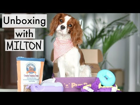 UNBOXING Pupbox with Milton | Monthly Subscription for Puppies | Cavalier King Charles Spaniel