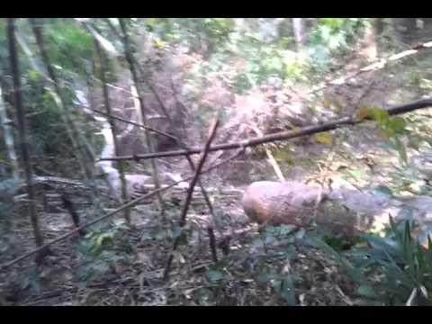chặt phá rừng