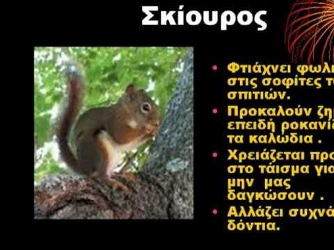 Ζώα του δάσους.wmv