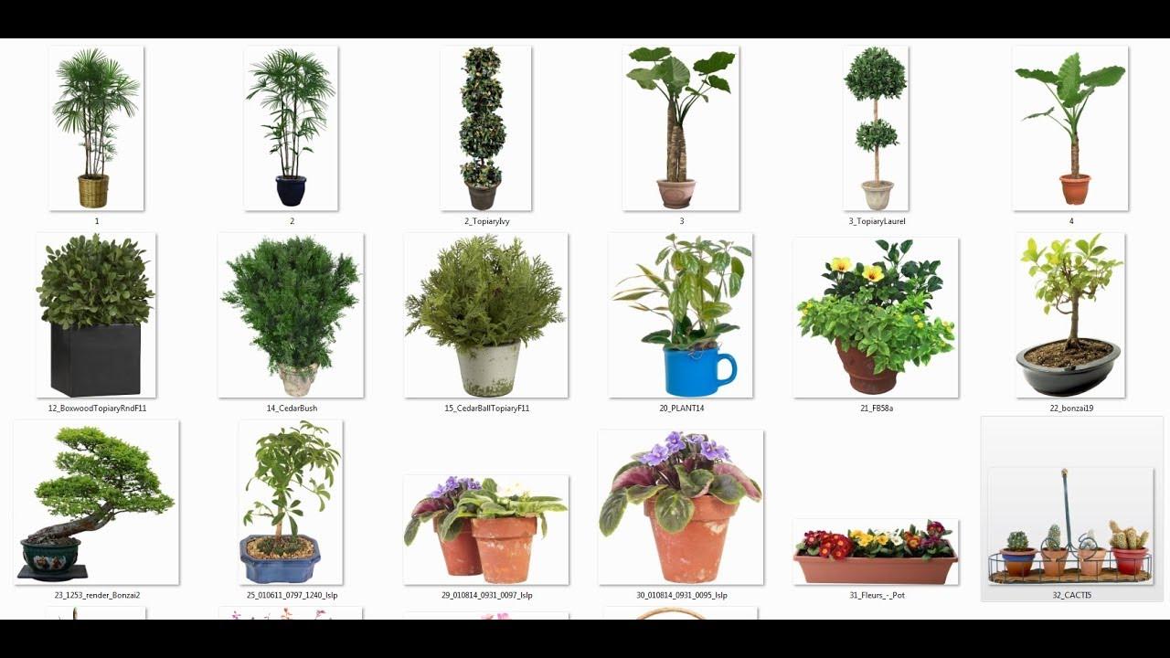 Recurso Plantas En Png Para Photoshop