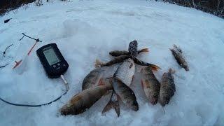 эхолот для зимней рыбалки видео
