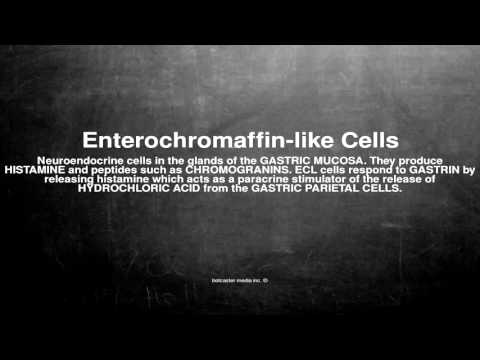 Medical vocabulary: What does Enterochromaffin-like Cells mean