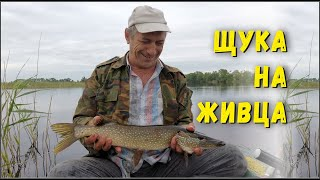 Рыбалка на Щуку Как поймать щуку на живца