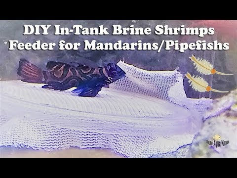 DIY In-Tank Brine Shrimps Feeder For Mandarins/Pipefishes & Hatchery (PaulB Style)