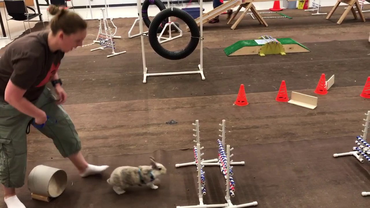 bunny obstacle course youtube