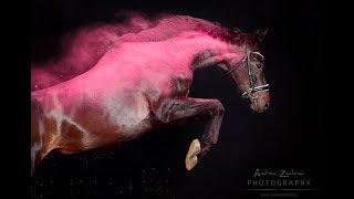 ~ Конный спорт ~ Nirvana ~ Equestrian sport ~
