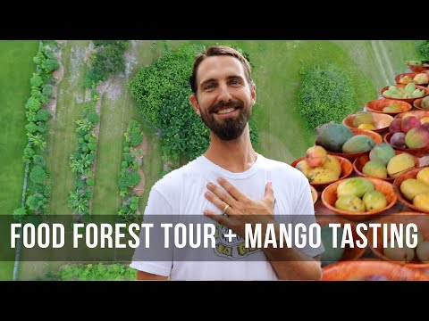 What's Ripening? Food Forest Tour + Mango Tasting