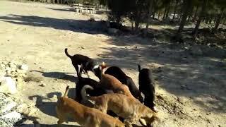 Баку, Бездомные, голодные собаки в Баку