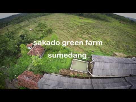 Sakado Green Farm