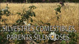 Plantes silvestres comestibles, parents silencioses